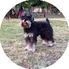 Charly perro BTA - Team Backtrack Academy